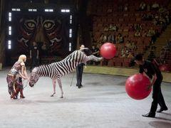 Пони Пончик из Пензы гастролирует с цирком «Сафари»